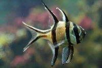 Начинающему аквариумисту. Выбор аквариумных рыбок
