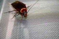 Что делать, если одолели тараканы, мыши, муравьи