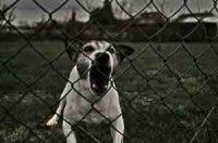 Что делать, если вы столкнулись с агрессивной собакой