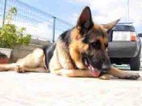 Что делать, если собака попала под машину