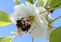 Укус пчелы, первая помощь